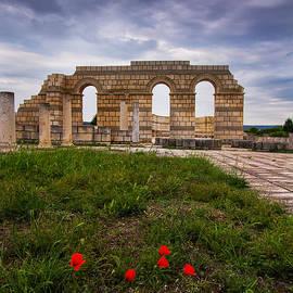 Eti Reid - Poppies in the ruins