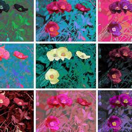Douglas MooreZart - Poppy Collage a la Warhol