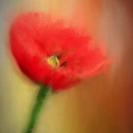 Darren Fisher - Poppy Elegance