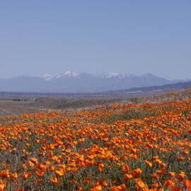 Ivete Basso - Poppy Land