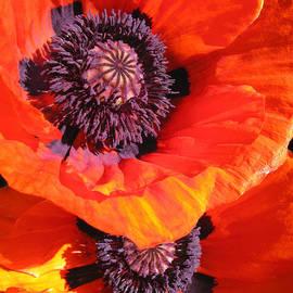 Brooks Garten Hauschild - Poppy Tandem