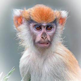 Jim Fitzpatrick - Portrait of a Baby Patas Monkey
