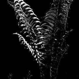 Mother Nature - Portrait Of A Fern in Black and White