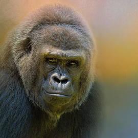 Jai Johnson - Portrait of a Gorilla