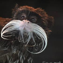 Jim Fitzpatrick - Portrait of a Mustachioed Tamarin