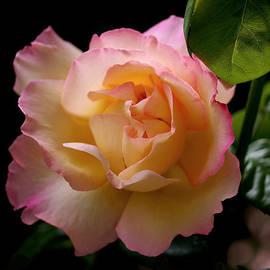Rona Black - Portrait of a Rose