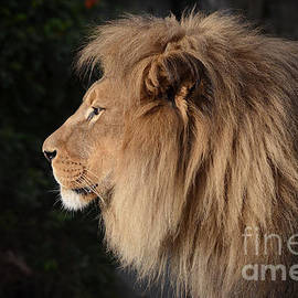 Jim Fitzpatrick - Portrait of the King of the Jungle