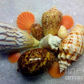 Hanza Turgul - Positive Energy Seashells