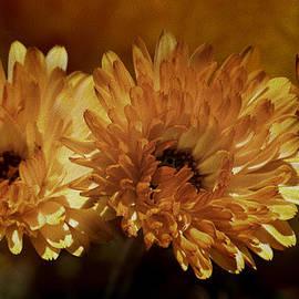 Diane Schuster - Pot Marigold