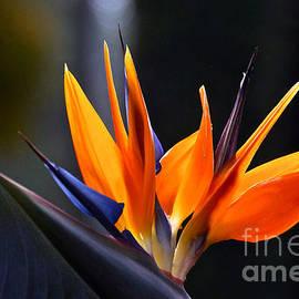 Byron Varvarigos - Power Flower