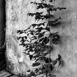Tomasz Dziubinski - Power of Nature