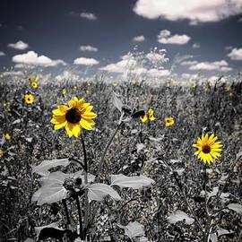 Elena Elisseeva - Prairie Sunflowers