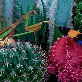Leslie Crotty - Praying Mantis  Hunting for prey