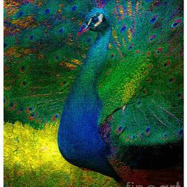 Olahs Photography - Pretty as a Peacock