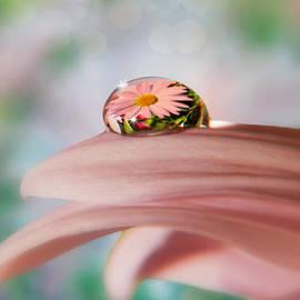 Nina Bradica - Pretty Flower Drop
