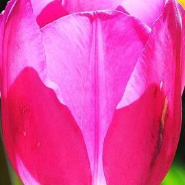 Kim Bemis - Pretty in Pink