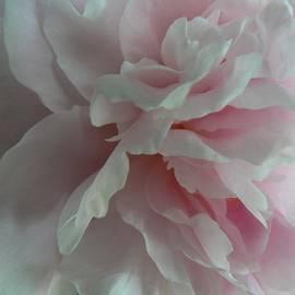 Lorraine Keil - Pretty in Pink
