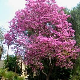 Melissa McCrann - Pretty In Pink