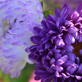 Photographic Art and Design by Dora Sofia Caputo - Pretty in Purple