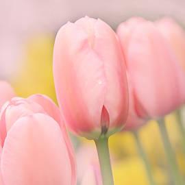 Jennie Marie Schell - Pretty Pastel Pink Tulip Flowers
