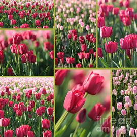 Carol Groenen - Pretty Pink and Green Tulips Collage