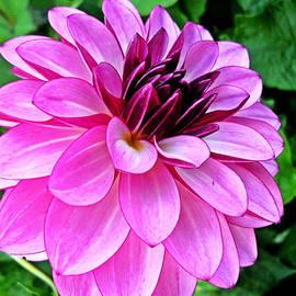 Kevin D Davis - Pretty Pink Petals