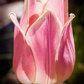 Omaste Witkowski - Pretty Pouting Pink Tulip Abstract Garden Art by Omaste Witkowsk
