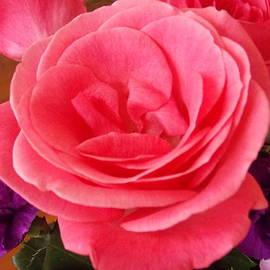 Catherine Gagne - Pretty Rose