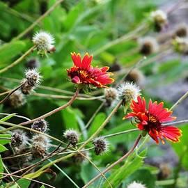 Chuck  Hicks - Pretty Weeds