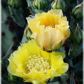 Valerie Loop - Prickly Pear Bloom