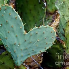 Kerri Mortenson - Prickly Pear Heart
