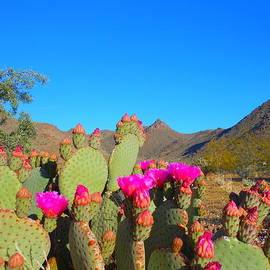 James Welch - Prickly Pear