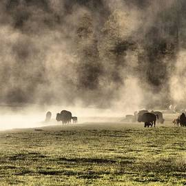 Dan Sproul - Buffalo Herd In Yellowstone