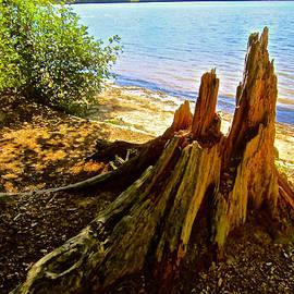 Elizabeth Tillar - Primeval Forest