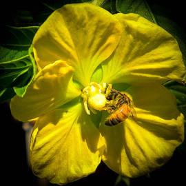 Christy Usilton - Primrose and Bee