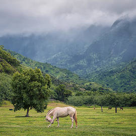 Hawaii  Fine Art Photography - Pristine Pastures