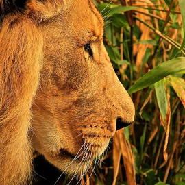 Laddie Halupa - Profiles of a King