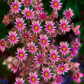 Omaste Witkowski - Promising Pink Petals Abstract Garden Art by Omaste WItkowski