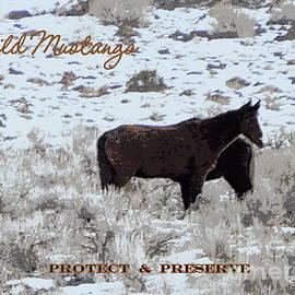 Bobbee Rickard - Protect n Preserve Wild Mustangs