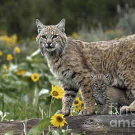 Wildlife Fine Art - Protection