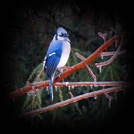 MTBobbins Photography - Proud Jay