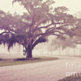 Scott Pellegrin - Proud Oak in the Fog