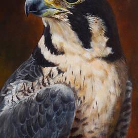 Arie Van der Wijst - Proud - Peregrine Falcon