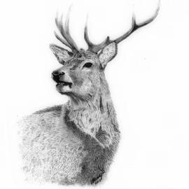Wendy Brunell - Proud Stag