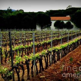 Lainie Wrightson - Provence Vineyard