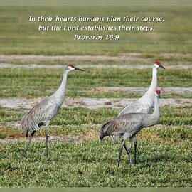 Dawn Currie - Proverbs 16 9