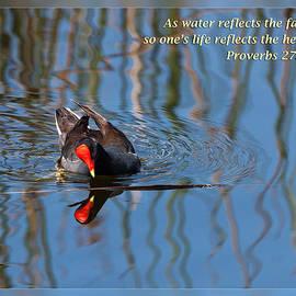 Dawn Currie - Proverbs 27 19