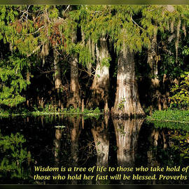 Dawn Currie - Proverbs 3 18