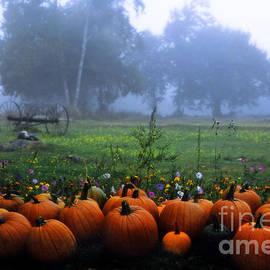Alana Ranney - Pumpkin Farm