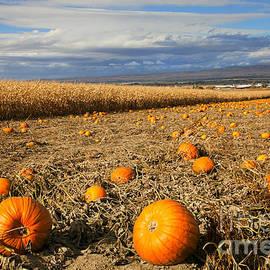 Mike  Dawson - Pumpkin Harvest